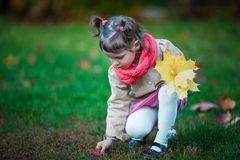 Toddler girl pick up leaves in the park. Small girl outdoor in the park with yellow leaves Stock Photography
