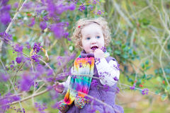 Toddler girl picking purple berries in autumn park Stock Images