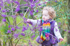 Toddler girl picking purple berries in autumn park Royalty Free Stock Images