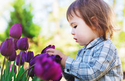 Toddler girl playing with purple tulips Stock Photos