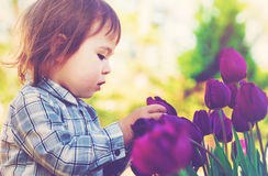 Toddler girl playing with purple tulips. Outside in spring Stock Image
