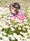 Toddler girl sitting in the daisy field Royalty Free Stock Photos