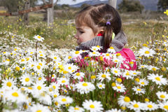 Toddler girl sitting in the daisy field Stock Images
