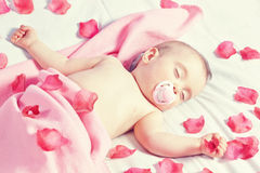 Toddler girl sleeping in a bed strewn with rose petals . Stock Images