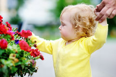 Toddler girl smelling red flowers at the spring or summer day Stock Images