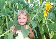Toddler girl with sunflower outdoor Royalty Free Stock Photo