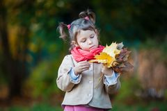 Toddler girl watching on her bouquet of leaves. Small girl outdoor in the park with yellow leaves Stock Image