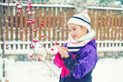 Toddler girl in winter village looking at frozen red berries Stock Photos