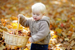 Toddler having fun in autumn Royalty Free Stock Image