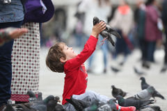 Toddler hugging a pigeon Royalty Free Stock Photo