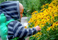 Child Looks at Flowers. This young child is entranced with his first encounter with yellow daisies Royalty Free Stock Photography