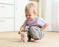 Toddler kid boy playing with kitten in children Royalty Free Stock Photos