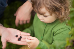 Toddler kid eating black currant outdoors royalty free stock photography