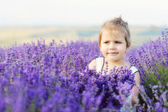 Toddler in lavender  field Stock Images