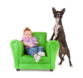 Toddler with a little black dog. Stock Photo