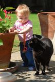 Toddler looking at cat. A toddler holds onto a pot of geraniums and looks at a black cat on a sunny day Royalty Free Stock Images
