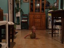 A toddler moving to music stock footage
