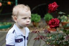Toddler next to roses Stock Image