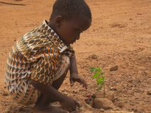 Toddler planting sapling on street in Ouagadougou, , Burkina Faso. Ouagadougou/ Burkina Faso - 7/20/2009: Unidentified child planting sampling on a dusty, red stock photos