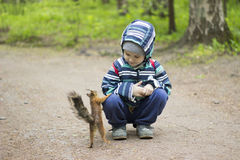 Toddler play squirrel in park. Kids meet nature. royalty free stock photography