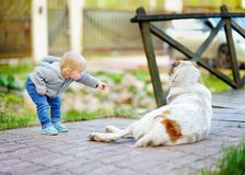 Toddler playing with big dog. Toddler boy playing with big dog outdoors Royalty Free Stock Photos