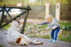 Toddler playing with big dog. Toddler boy playing with big dog outdoors Stock Images