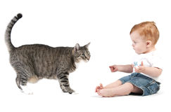 Toddler playing with a cat Royalty Free Stock Photography