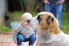 Toddler playing with dog Stock Image