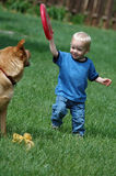 Toddler playing fetch game. With dog and frisbee stock images