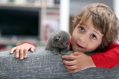 Toddler playing with a kitten Stock Photo