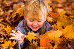 Toddler plays in the leaves. Two year old blonde toddler plays in the fall leaves in autumn in Maine stock photos