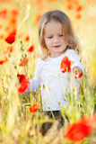 Toddler in poppy field Stock Image