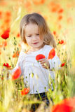 Toddler in poppy field Stock Photos