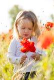 Toddler in poppy field Stock Photos