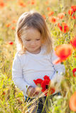 Toddler in poppy field Royalty Free Stock Photos
