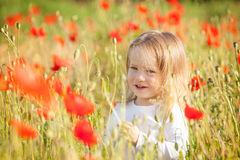 Toddler in poppy field Stock Images