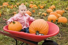 Toddler at pumpkin farm. Blond toddler girl child sitting in a red wheelbarrow at the pumpkin farm Stock Image