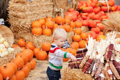Toddler at the pumpkin patch Stock Photos