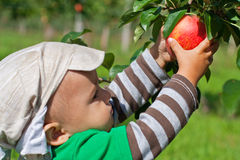 Toddler reaching for an apple royalty free stock images