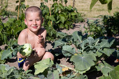 Toddler is reaping turnips Stock Image