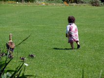 Toddler running on grass. Rear view of female toddler running on grass near duck, summer scene Stock Images