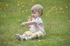 Toddler seated in the garden , playing with flowers Royalty Free Stock Images