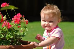 Toddler smiling near geraniums in a pot Stock Photography