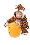 Toddler in Tiger Costume over pumpkin Royalty Free Stock Image
