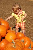 Toddler touching pumpkins Royalty Free Stock Photos