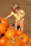 Toddler touching pumpkins Royalty Free Stock Photos