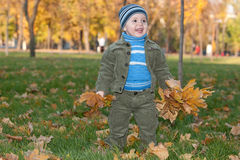 Toddler walking in the autumn park Royalty Free Stock Image
