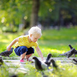 Toddler walking in the park and feeding pigeons Stock Photos