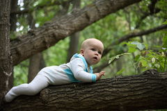 Toddler walking on a tree. The kid who can not walk, crawl on a tree royalty free stock photos