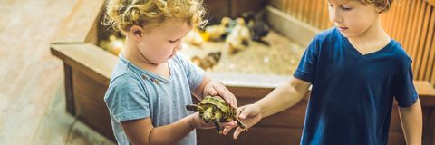 Toddlers boy and girl caresses and playing with turtle in the petting zoo. concept of sustainability, love of nature, respect for. The world and love for royalty free stock photography